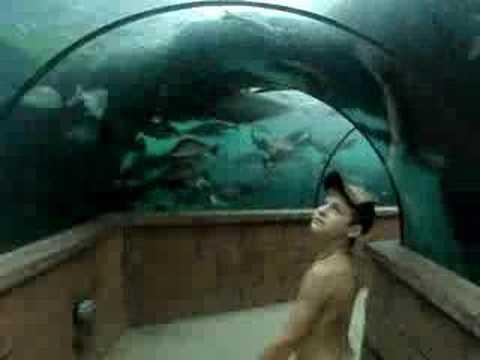 Atlantis, Paradise Island, Bahamas (underwater walk) - YouTube