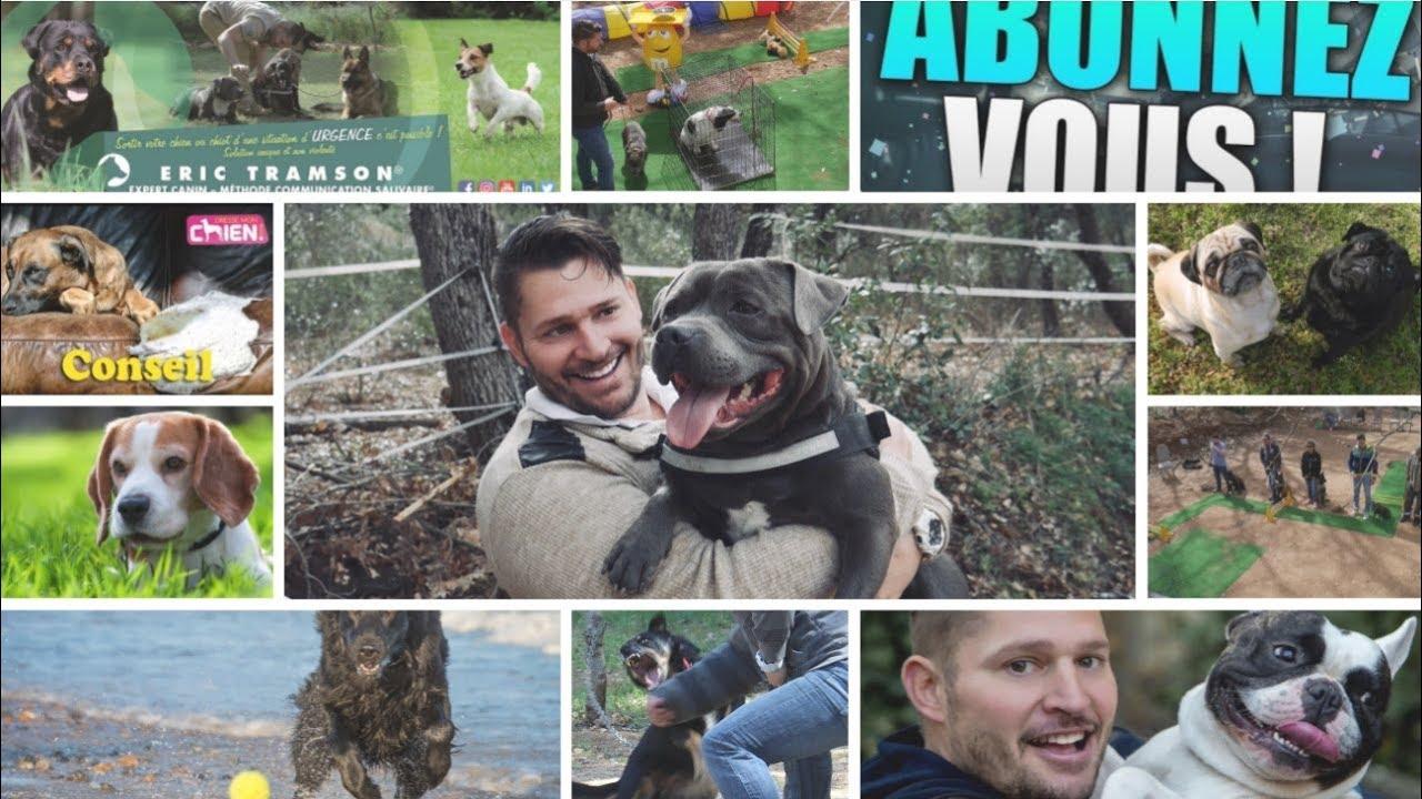 Comment Porter Un Chien Education Canine Collective Youtube