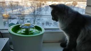Фонтан для кошек