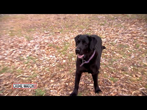 K9 Crime-Fighter: Buster the 3-Legged Dog Finds Buried Bodies - Crime Watch Daily
