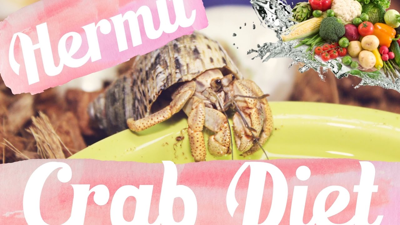 Hermit Crab Diet What I Feed My Crabs Daily Lori S Hartland Youtube
