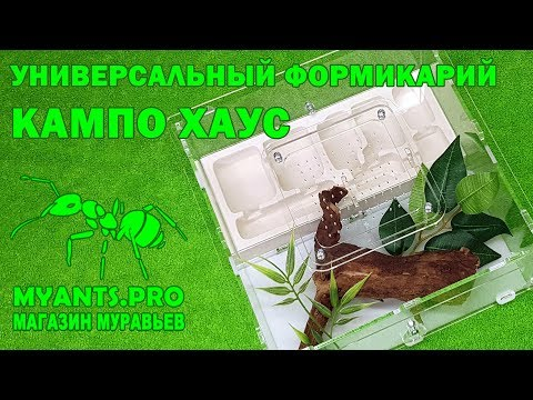 Кампо Хаус - универсальный формикарий для муравьев