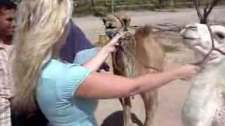 Marrakech - baby camel 2