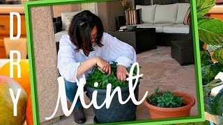 HOW TO DRY MINT LEAVES FOR COOKING AND FOR TEA - WITHOUT DEHYDRATOR - DRYING HERBS AT HOME