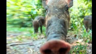 фото смешные животные, прикольные видео с животными.