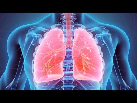 Lungs - 220 Hz - Digital Tuning Fork - Organ Series - Meditation