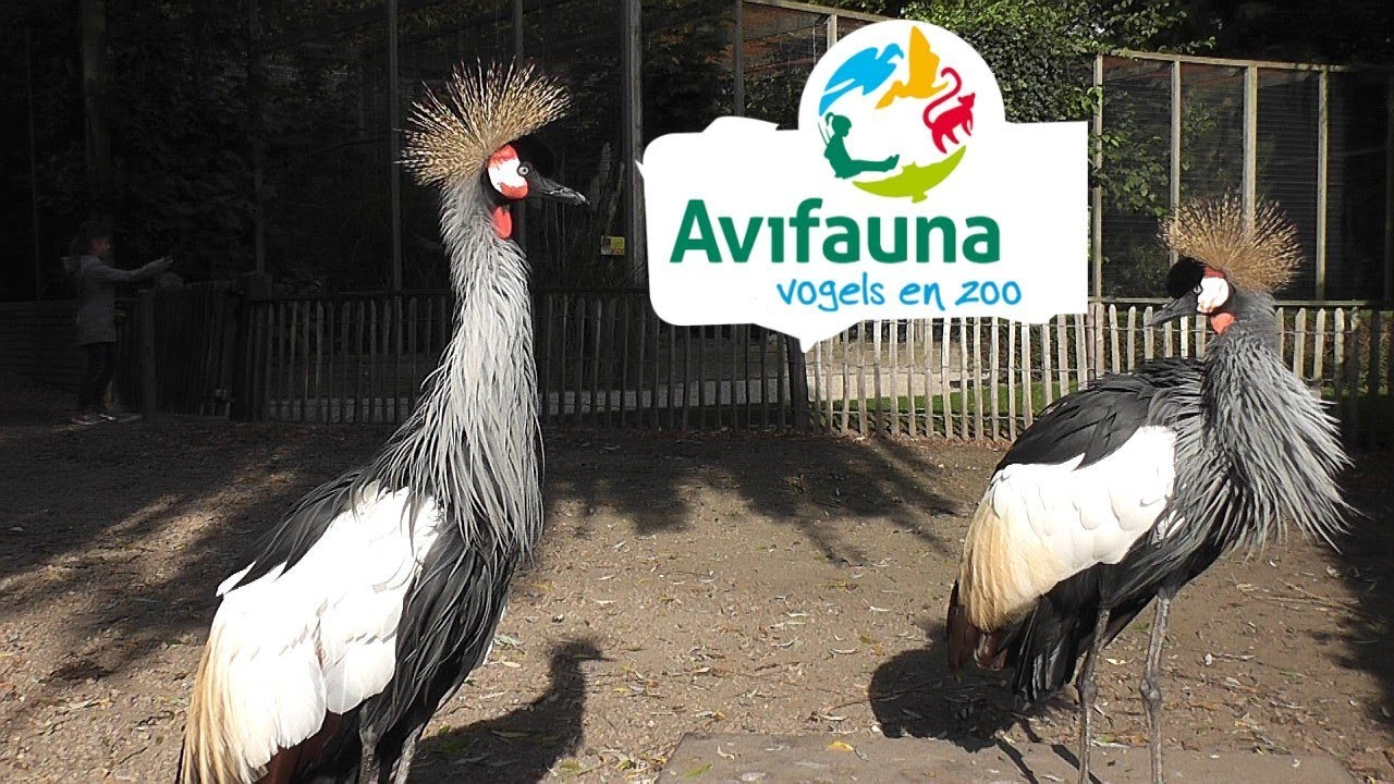 Avifauna Bird Park - Alphen aan den Rijn, Holland - YouTube