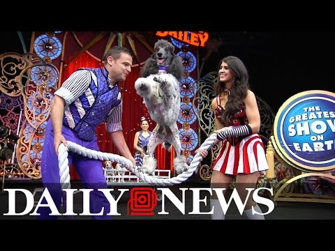 Daily Newser trys out dog training at Ringling Bros. and Barnum & Bailey Circus