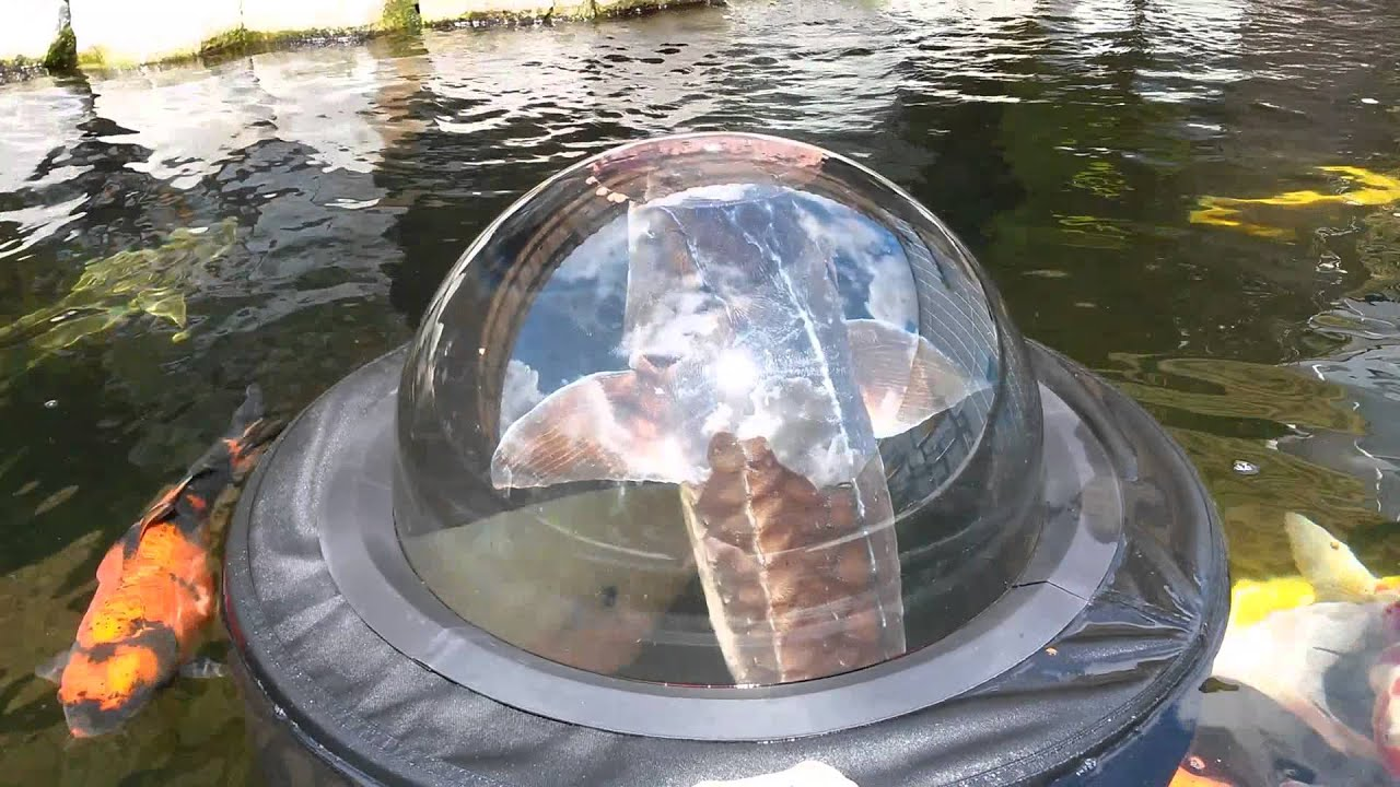 Sturgeon feeding in the velda floating fish dome youtube for Koi pond window
