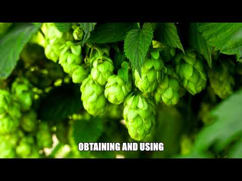Hops a natural good night's sleep - 2020 video full hd natural remedies