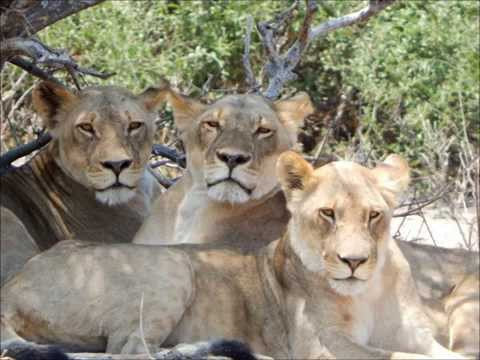 Road Scholar African Wildlife Safari & Cape Town Extension Oct 2015
