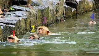 Top 5 funny video! Monkeys swimming Competition, Try Not to Laugh with Amber group