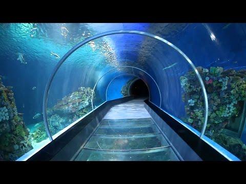 L'Aquarium Barcelona - Nie tylko WoT