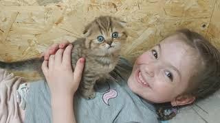 Ребенок Мама кошка и милые котята любовь для семьи Так мило котята мяукают Счастливый день
