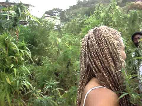plantaciones jamaica