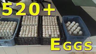520+ Duck Egg Food Bank Donation & Road Trip April 23, 2019