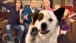 Собака точка ком   1 сезон, 21 серия