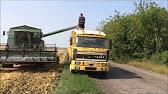 Продаём с хозяйства от 500 тонн кукурузу гост с ндс цена 8000 р/тонна. Ооо «пензенские семена» принимает заявки от сельскохозяйственных.