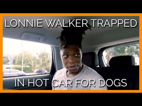 Jennie James - Spurs' Lonnie Walker Reminds You To Not Leave Your Pet In A Hot Car