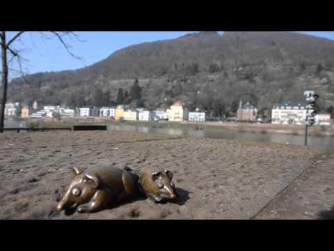 Die schönsten Plätze Heidelbergs