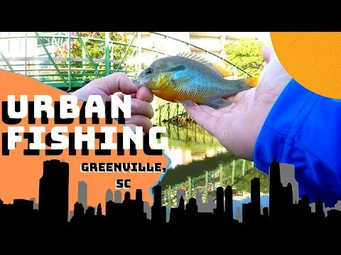 Urban RIVER FISHING In DOWNTOWN GREENVILLE