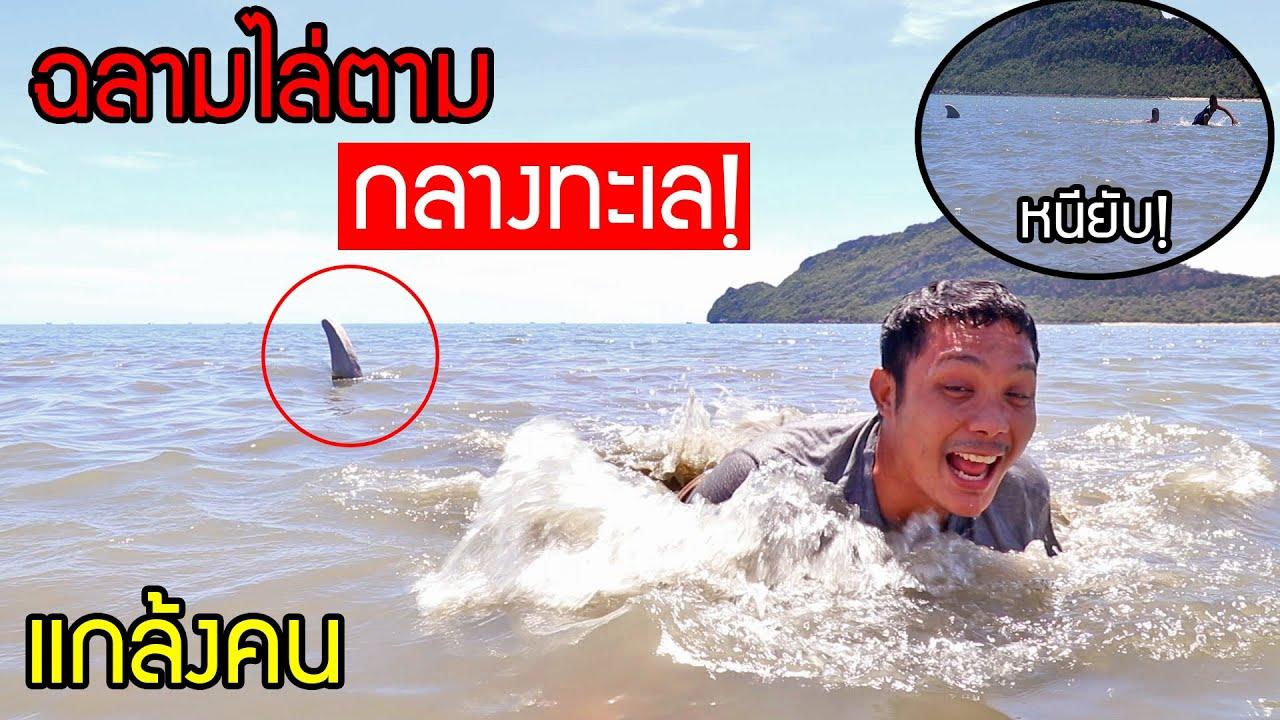 แกล้งคน! ฉลามบังคับในทะเล ตัวโคตรใหญ่ วิ่งดิวิ่ง
