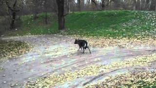 Усыпление животных в Москве и области