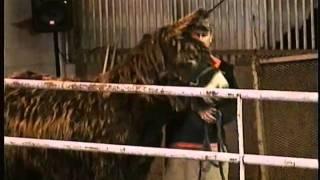 Jenny Baudets du Poitou At Horse Auction, Meadow Wood Farms, Snohomish, WA - 3/20/2011