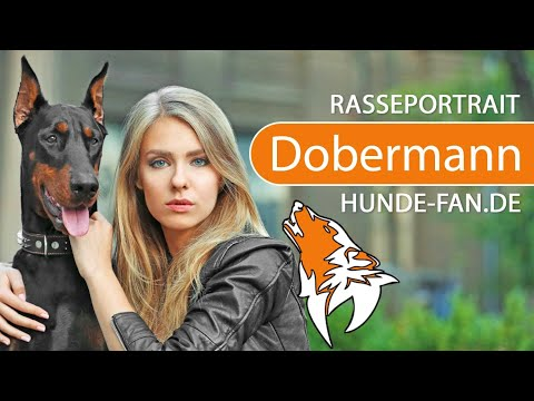 Doberman [2018] Breed, Appearance & Character