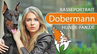 Dobermann Rasse - Aussehen, Charakter & Wesen