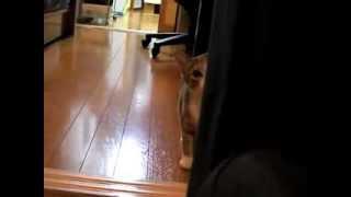 Stalking Cat - Oficial