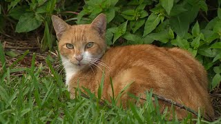 Miami-Dade offering money to those who help control stray cat population
