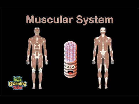 Muscle Anatomy Song for Kids/Muscle Anatomy for Children/Muscle Anatomy