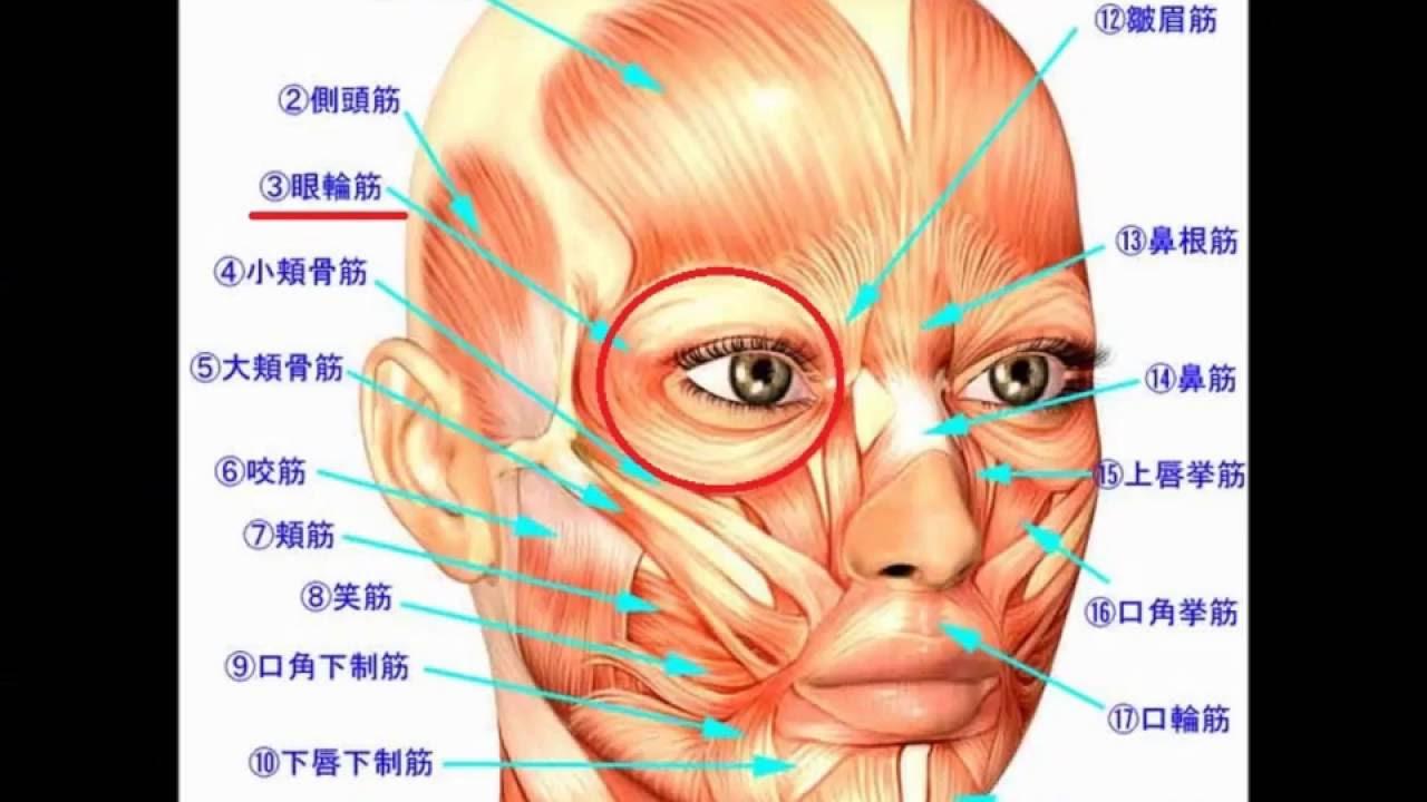 「眼輪筋」の画像検索結果