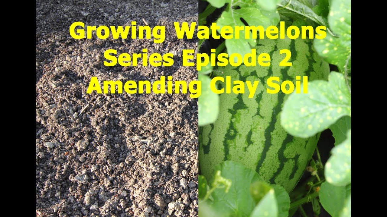 growing watermelons series amending clay soil episode 2 youtube