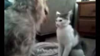 Dog Training - Dog Bodyslams Cat Wwe Style!