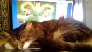 Кошка мешает играть в kingdom rush