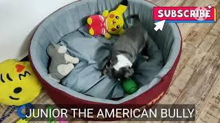 baby dog cute compilation video #3