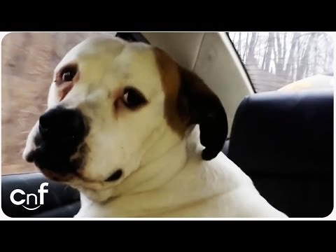 Funny Talking Dog | Bull Dog Says Sorry