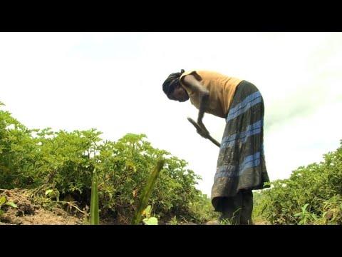 Rwanda's essential oils offer big profits from little land