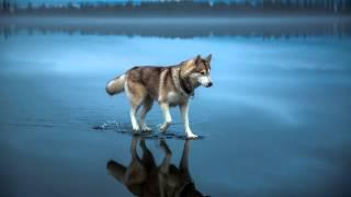 Собаки опровергающие законы физики (слайдшоу)