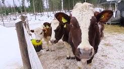 Tila ilman teuraita – Näin syntyi Eläinsuojelukeskus Tuulispää