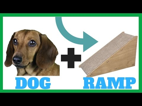 built-a-ramp-for-our-dachshund