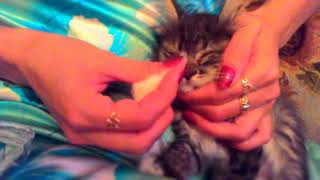 Кошка не любит котенка