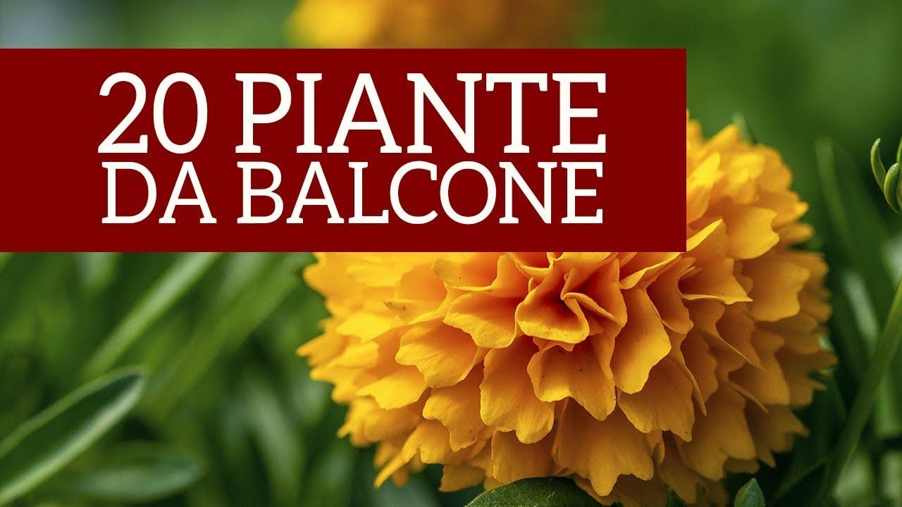 Fiori Da Balcone Ombra 20 piante annuali perfette per il tuo balcone primaverile