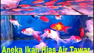 Toko Ikan Hias Tiban Batam