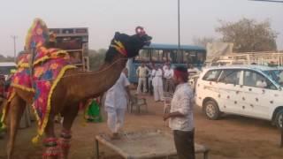 Hari Singh jakhar ki sadi me dance.katrathal sikar.date-17-11-16.