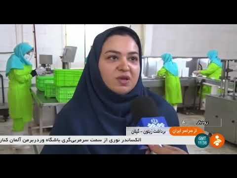 Iran Organic Olive harvest & products, Roudbar county برداشت و محصولات زيتون شهرستان رودبار ايران