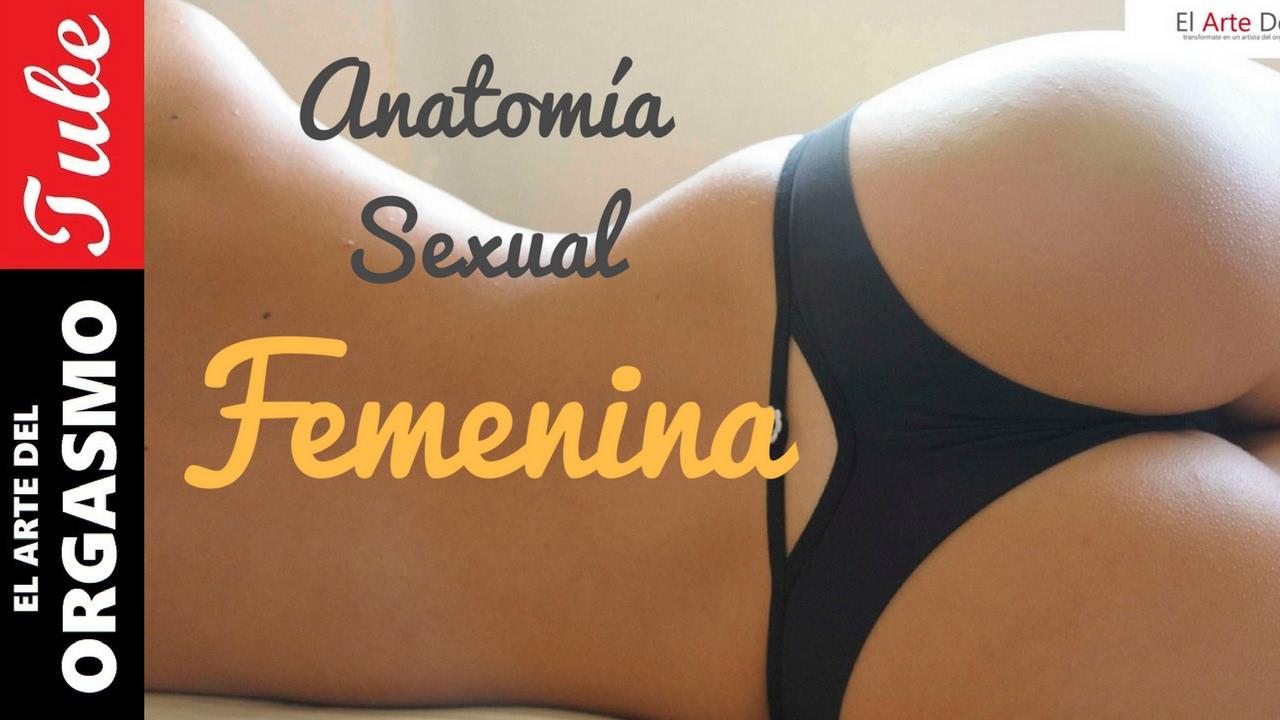 Anatomia Sexual Femenina - Tutorial - YouTube