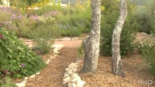 Butterfly Garden Design | Bulverde/spring Branch Library | Central Texas Gardener